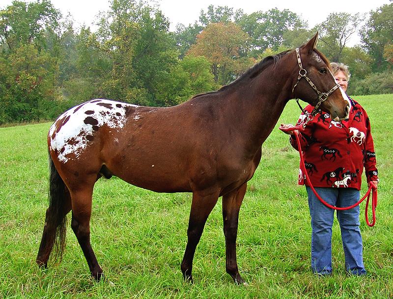 Celebration of the Horse 2