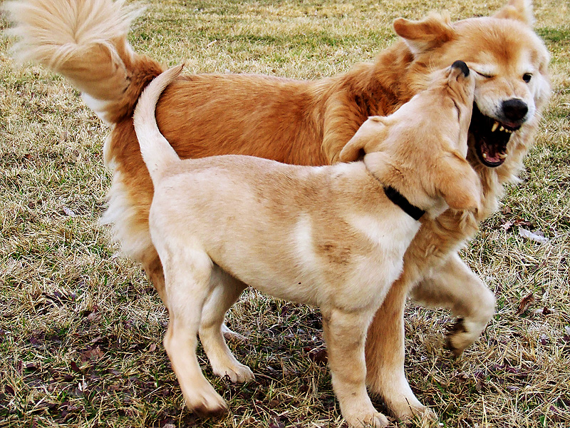Play fighting