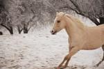 Free Gallop